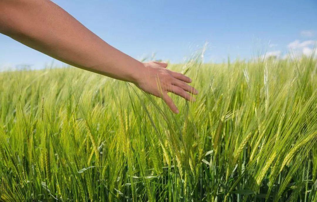 """美国农民""""吐槽""""贸易摩擦:一觉醒来发现收入又要少了,你能高兴得起来吗?"""